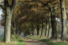 Free Old Oaks Of The Reinhard Forest Stock Images - 46561614