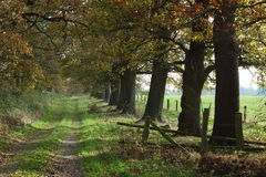 Free Old Oaks Of The Reinhard Forest Stock Photos - 46561733