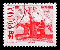 Old oaks, Rogalin, Tourist Attractions serie, circa 1966. MOSCOW, RUSSIA - SEPTEMBER 15, 2018: A stamp printed in Poland shows Old oaks, Rogalin, Tourist royalty free stock photography