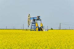 Old oil pump jack in canola rapeseed field. Stock Photos