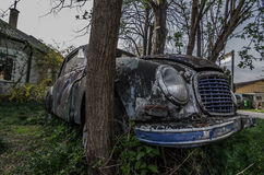 Old oldtimer trees Royalty Free Stock Photography
