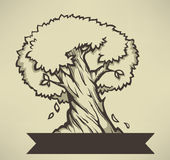 Old olive tree, vector illuctration Stock Image