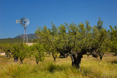 Old olive tree and wind mill royalty free stock photo