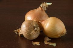 Old onion from last year`s harvest. Old dry onion from last year`s harvest on dark backgrouund stock images