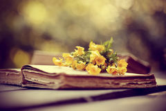 Old open book and bouquet of buttercups. Royalty Free Stock Photo