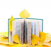 Old Open book with flower Royalty Free Stock Images