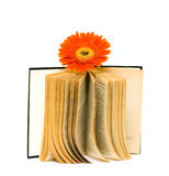 Old Open book with flower Stock Images