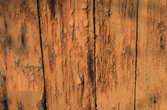Old orange wood door. Sunlight old wooden door covered with orange paint, which is partly fallen off Stock Photography