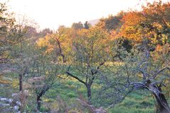 Old orchard in the autumn sun in the mountains royalty free stock photos