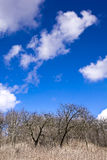 The old orchard on a background of blue sky with white clouds Royalty Free Stock Photography