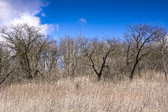 The old orchard on a background of blue sky with white clouds Stock Photography
