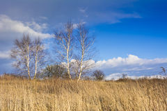 The old orchard on a background of blue sky with white clouds Royalty Free Stock Photos