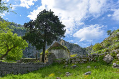 Old orthodox church. The old orthodox church under the pine in sunny day, Kotor city, Montenegro Royalty Free Stock Image