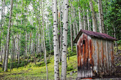 Old Outhouse in Aspen Forest Royalty Free Stock Photos