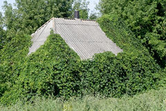 An old overgrown house. An old, almost collapsed house, how much did he survive Royalty Free Stock Image