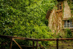 Old overgrown house. Covered in ivy Royalty Free Stock Photography