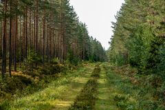 Free Old Overgrown Road In A Forest Royalty Free Stock Image - 133779546