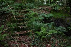 Overgrown stairs in the forest royalty free stock photo