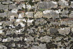 Old overgrown stone wall Stock Photography