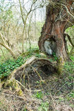 Old overgrown tree Stock Photo
