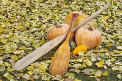 Old paddles and pumpkin Royalty Free Stock Images