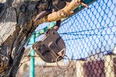 Old padlock with key hanging on the tree royalty free stock photos