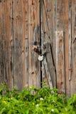 Old padlock on a wooden door Stock Image