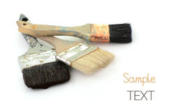 Old paint brushes. Well cared for old bristle paint brushes on white background with room for text Royalty Free Stock Images