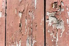 Old Paint Stock Photography