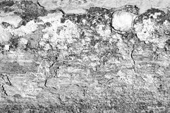 Old paint texture. Black and white image of old paint rotting off a curb Royalty Free Stock Photos
