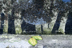 Old  painted cement wall with dry leaf Royalty Free Stock Photography