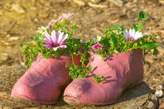 Old painted cracked rubber shoes as a flower pot Stock Photo