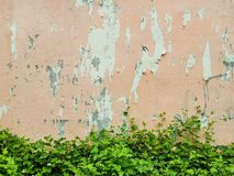 Old painted peach wall background. W w stock photos