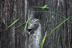 Old painted wood background. Picture of   wood background and grass Stock Photo