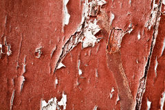 Old painted wood texture Royalty Free Stock Photos