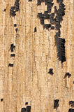 Old painted wood texture. Royalty Free Stock Photos