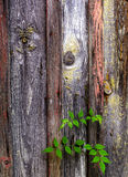 Old painted wooden door background Royalty Free Stock Photos