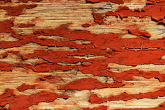 Old paited wood. Grungy old wood with rusty color cracked paint Stock Photography