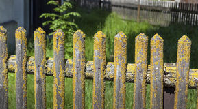Old Palisade covered with Moss Stock Photography