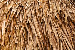 Old palm leaves Stock Photo