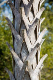 Old Palm Tree Trunk Royalty Free Stock Image