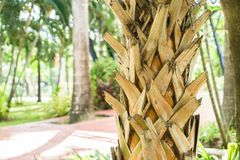 Old palm trunk in the public garden Royalty Free Stock Photography