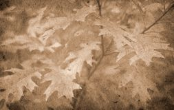 Old paper autumn background Stock Image