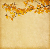 Old paper with autumn leaves. Stock Photos