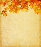 Old paper with  autumn leaves Stock Photography