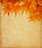 Old paper with  autumn leaves. Old paper with orange autumn leaves Royalty Free Stock Photo