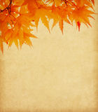 Old paper with  autumn leaves. Old paper with orange autumn leaves Stock Photography