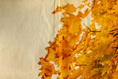 Old paper with autumn leaves Royalty Free Stock Image