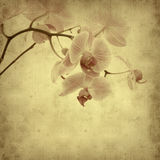 Old paper background. With pink stripy phalaenopsis orchid Royalty Free Stock Images