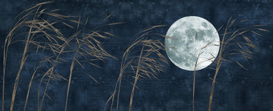 Old paper background. With grass stalk and full moon Royalty Free Stock Image